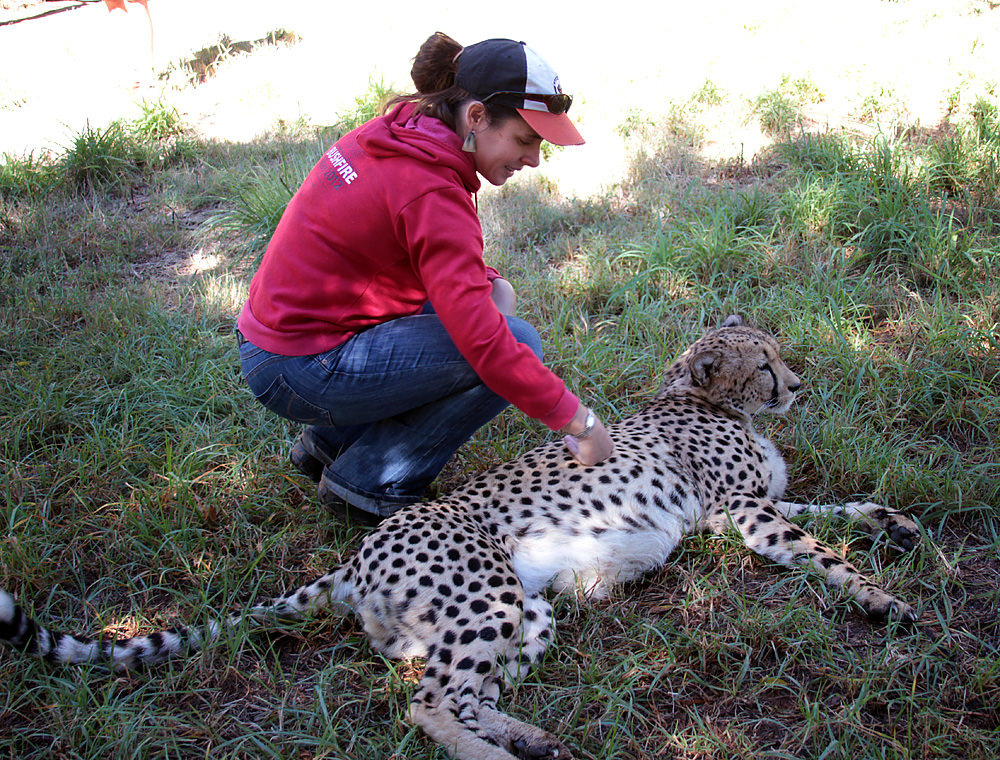 Heather and cheetah