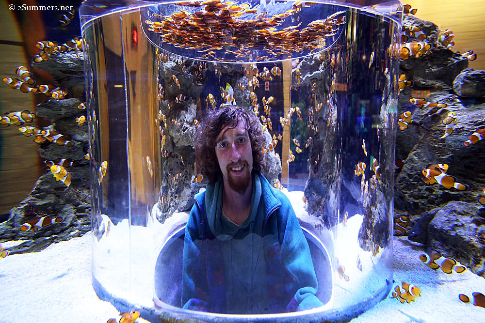Ray-in-fish-tank