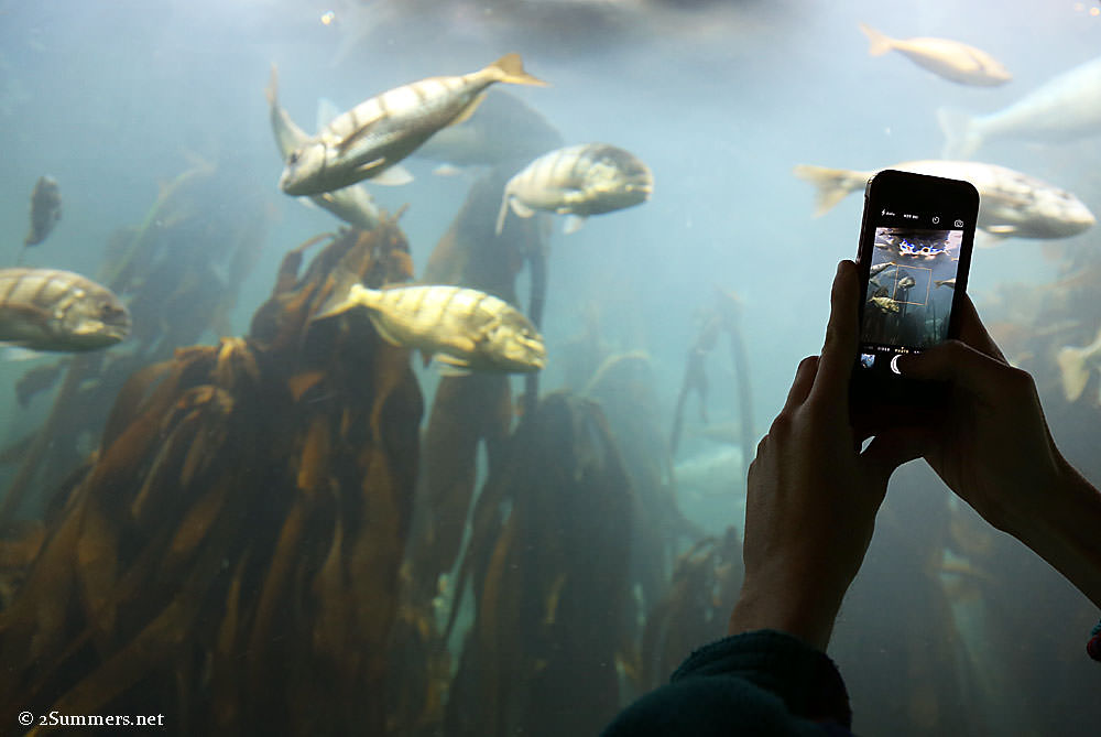 iPhone-and-fish